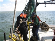 Removal crew hauls in debris drag nets in Mississippi Sound.