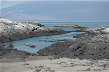 Marine iguanas, sally lightfoots, and flightless cormorants co-existing on thebeach at Punta Espinosa.