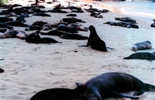 Sealions in the shade on a beach