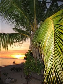 Palm fronds and a couple strolling in the water highlighted by a tropicalsunset.