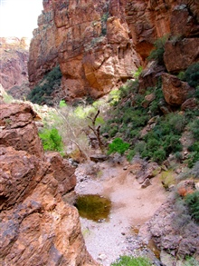 A pool of water, a remnant of the last rains, in a dry wash in Tonto NationalForest.