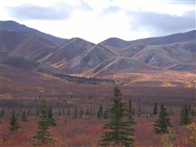 Fall colors, stunted evergreens, and barren alpine mountains of South CentralAlaska.