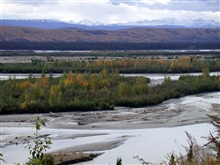 A braided river and snow-covered mountains highlighted by fall colors.
