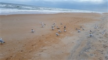 Ormond beach florida ....taken on the beach of Ormanders-by-the-Sea