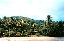 View of the jungle at Isla Gorgona.