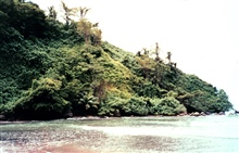 Jungle and rocky headland on Isla Cocos.