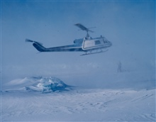 NOAA Bell UH-1M helicopter getting in position to weigh sedated polar bear.