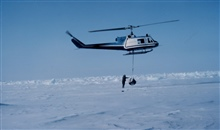 Weighing a polar bear by suspending the bear from a NOAA Bell UH-1M helicopter.