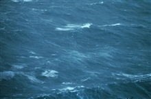 Sea surface as observed from 500 feet in Hurricane Belle.