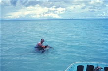 Dr. Jim McVey tagging green turtles on Helens Reef