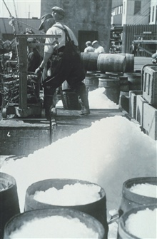 Mackerel being unloaded, salted, and barreled at the Boston Fish Pier.F&WL; 12,351.