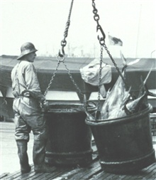 A 500-lb bucket of yellow-fin tuna ready to be offloaded from fishing vesselto a receiving trough for further processing.  F&WL; 12,343.