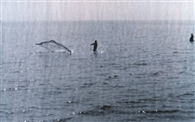 Fisherman casting his net.  Photo F&WL; 12,571.