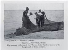 Here's a new one boys!  The veteran collector of the Woods Hole station is inthe foreground of both pictures.  Photo #2.In: The Boy with the U.S. Fisheries, by Francis Rolt-Wheeler, 1912.  Boston,Lothrop, Lee & Shepard Co. P. 346.