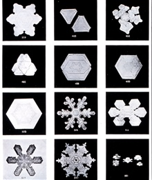 Plate II of Studies among the Snow Crystals ...  by Wilson Bentley,The Snowflake Man.   From Annual Summary of the Monthly Weather Reviewfor 1902.  Bentley was a bachelor farmer whose hobby was photographingsnow flakes.