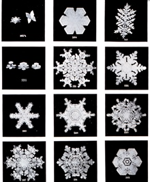 Plate III of Studies among the Snow Crystals ...  by Wilson Bentley,The Snowflake Man.   From Annual Summary of the Monthly Weather Reviewfor 1902.  Bentley was a bachelor farmer whose hobby was photographingsnow flakes.