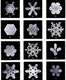 Plate V of Studies among the Snow Crystals ...  by Wilson Bentley,The Snowflake Man.   From Annual Summary of the Monthly Weather Reviewfor 1902.  Bentley was a bachelor farmer whose hobby was photographingsnow flakes.