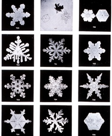 Plate VI of Studies among the Snow Crystals ...  by Wilson Bentley,The Snowflake Man.   From Annual Summary of the Monthly Weather Reviewfor 1902.  Bentley was a bachelor farmer whose hobby was photographingsnow flakes.