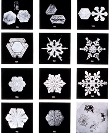 Plate VIII of Studies among the Snow Crystals ...  by Wilson Bentley,The Snowflake Man.   From Annual Summary of the Monthly Weather Reviewfor 1902.  Bentley was a bachelor farmer whose hobby was photographingsnow flakes.