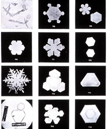 Plate IX of Studies among the Snow Crystals ...  by Wilson Bentley,The Snowflake Man.   From Annual Summary of the Monthly Weather Reviewfor 1902.  Bentley was a bachelor farmer whose hobby was photographingsnow flakes.