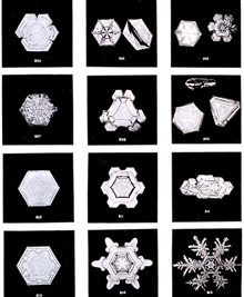 Plate XII of Studies among the Snow Crystals ...  by Wilson Bentley,The Snowflake Man.   From Annual Summary of the Monthly Weather Reviewfor 1902.  Bentley was a bachelor farmer whose hobby was photographingsnow flakes.
