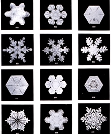 Plate XIV of Studies among the Snow Crystals ...  by Wilson Bentley,The Snowflake Man.   From Annual Summary of the Monthly Weather Reviewfor 1902.  Bentley was a bachelor farmer whose hobby was photographingsnow flakes.