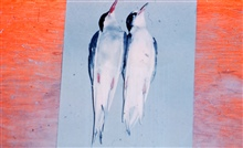 Arctic terns (Sterna paradisaea) for scientific specimens.