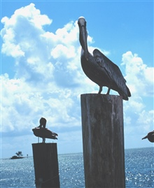 Pelicans perched on pilings.
