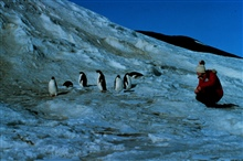 Lieutenant Cindy McFee visits with penguins at Little America.Lt. McFee was on the way to South Pole Station.She was the third woman to winter over.