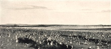 The remains of a cornfield after grasshoppers had completed the destructionbegun by drought.  90% of crops surviving the drought were destroyed bygrasshoppers in an 11,000 square mile area.  In:  The Drought of 1931-1932 inMontana, North Dakota, Sout