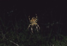 A large yellow and black spider.