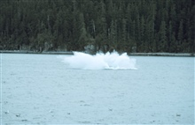 Splash as humpback - Megaptera novaeangliae -  hits the water after breaching.