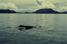 Whale visiting hydrographic survey crew.