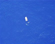 Whale shark as seen from DAVID STARR JORDAN spotter helicopter.
