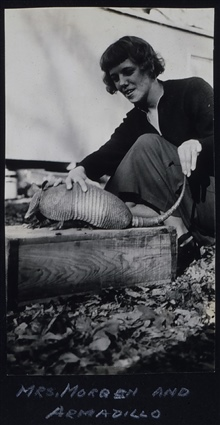 Mrs. Morgen attempting to domesticate an armadillo.Field camp in south Texas.Triangulation party of Carl Aslakson.