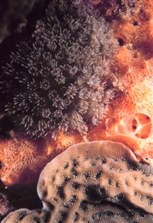 Coral polyps extended?