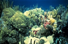 A shallow water reef scene.