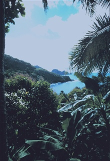 View through coastal vegetation of the shore of American Samoa