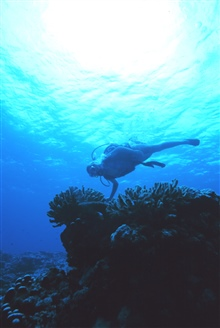 A diver enjoying the wonders of the coral reef at Fagatele Bay.