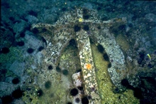 An anchor from the SS CUBA encrusted with sea life.