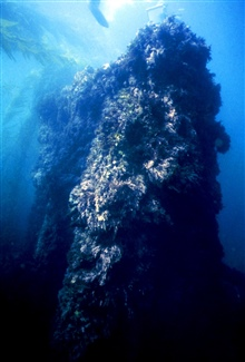 The triple-expansion engine of the CUBA covered with marine floraand fauna.