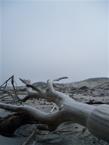 Driftwood in the dunes in the Channel Islands