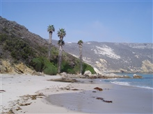 Palm trees on the shore of one of the Channel Islands.
