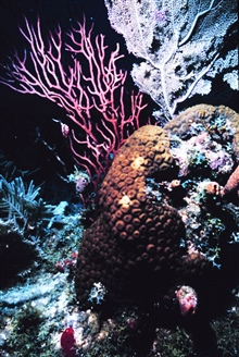 A variety of corals