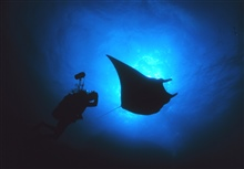 A Manta Ray blocks out the sun