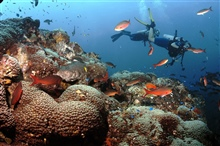 Divers on a rich reef environment including creolefish (Paranthias furcifer)and blue chromis (Chromis cyanea).