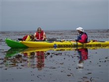 Kayaking off Cannery Row in the kelp bed.
