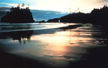 Sunset along an Olympic Coast beach