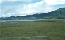 Kodiak Island cattle ranching