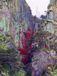 Possibly red lichen covering cliff in Southeast Alaska